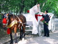 Carriage is popular prop for wedding photos.