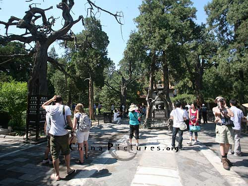 There are many ancient pines and cypresses in the Imperial Garden.
