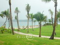 Verdant grasslands accompanied with upright coconut palm trees - a picture of tropic landscape in Sanya.
