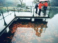 Viewing Fish at Flower Harbour-one of the top ten West Lake scenic spots