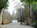 Wandering in the Stone Forest