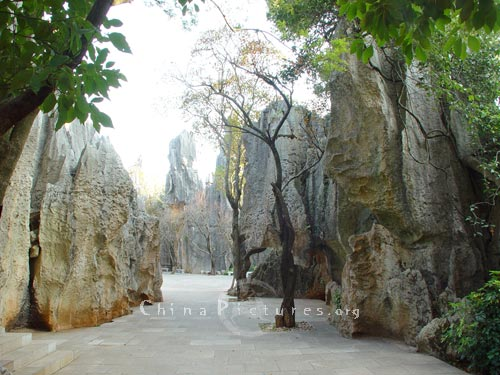 Wandering in the Stone Forest is a fantastic experience. Kunming,Yunnan.