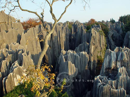Straight towering rocks in the Stone Forest, Yunnan.