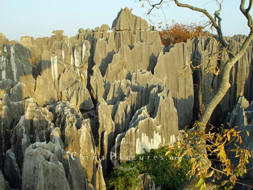 Stone Forest in Kunming, Yunnan, is a typical example of karsts topography.